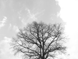 Tree of Life by GorgoNL
