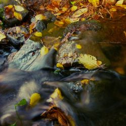 Autumn Stream by FreyaPhotos