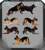 GSD litter-Closed by AmarosoRanch