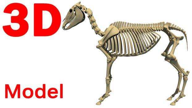 3D Models - Animal Skeleton 3D Models by Gandoza