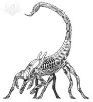 Scorpion Alien by scorpenomorph