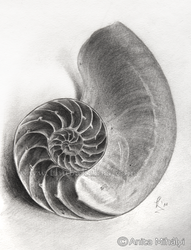 Nautilus Shell - Practice Drawing by Thubakabra