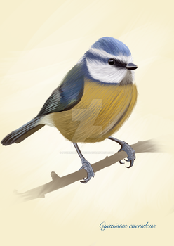 Blue tit by PowermadMistress