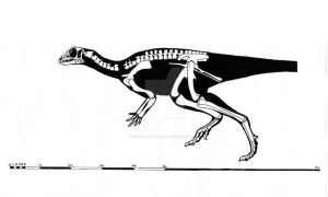 Orodromeus makelai skeletal reconstruction by ornithischophilia