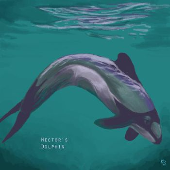 Hector's Dolphin by horselover146515