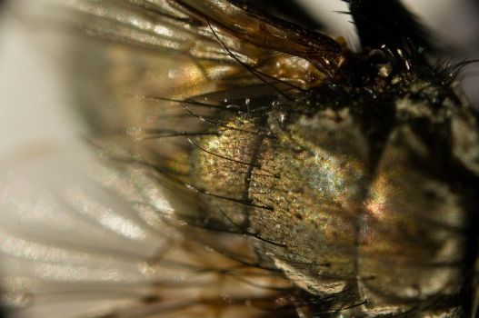 A fly...up close 14 by Egg-Salad