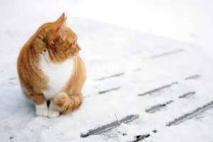 cat in the cold 2 by ZiggetyZag