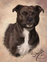 English Staffordshire Terrier by Sharpk