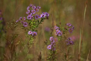 Wildflowers by BlackRoomPhoto