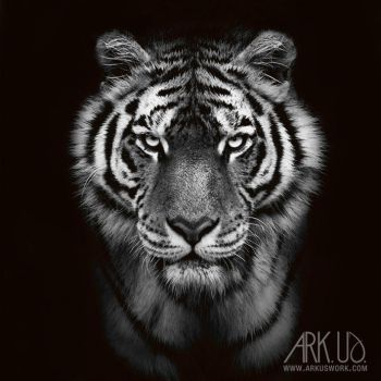 Tigre by Arkus83