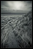 The path to the beach by MessiahKhan