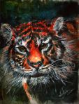Eye of the Tiger by TamiTw