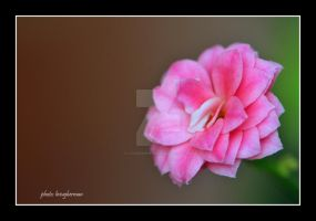 small pink by liviugherman