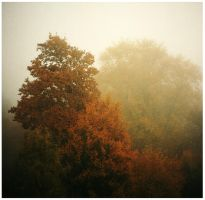 Trees in the Fog by Stormblast