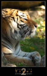 eyes of the tiger 2 by pinkland