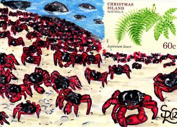 Christmas Island Crabs Stamp Card by Dangerskillz