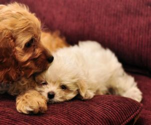 Cuddle Puppies By Mjag On Deviantart