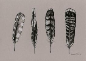 Feather study by LucieOn