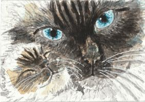 Ragdoll Siamese cat  watercolor painting by tulipteardrops