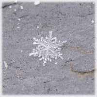 First Snowflake by Siobhan68