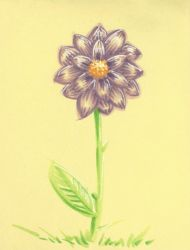 A Purple Flower by 0torno