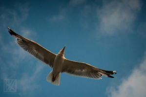 Float in the Sky . . . ? by kaioian