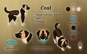 Coal Reference Sheet by Tienala