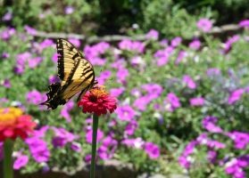 Yellow Butterfly by jeepgurl8204