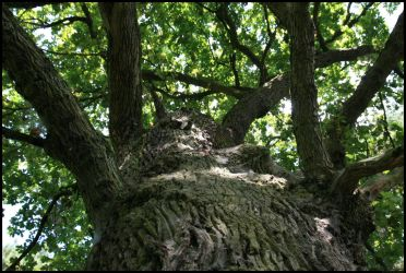 up the old oak by Adarion