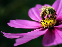 Bee and Cosmo by TruemarkPhotography