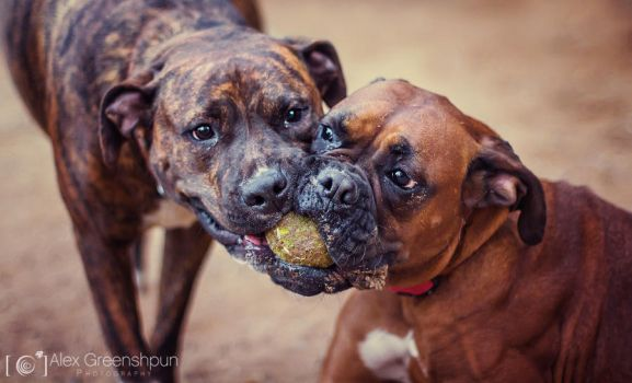 Whose Ball is it Anyways? by alexgphoto