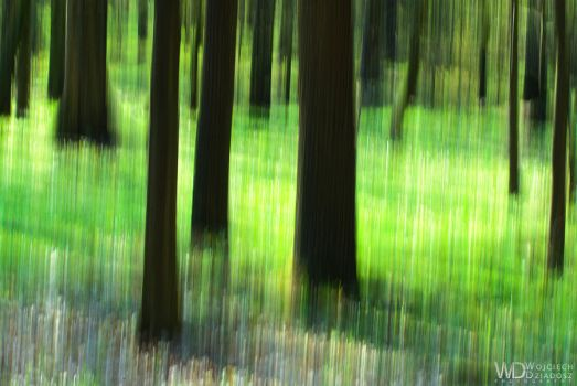 Abstract forest by WojciechDziadosz