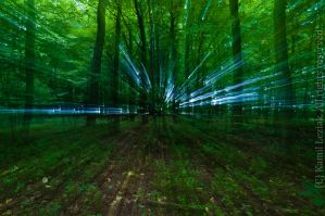 Magic forest by vertiser