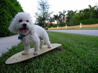 Skater Dog by Greentea-and-Clovers