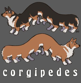 Corgipedes by extinctinks