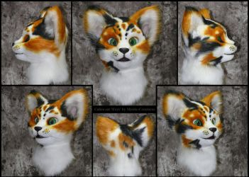 Calico Cat 'Erys' - flash photography version by Mystic-Creatures