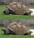 Tortoise stock by PirateLotus-Stock