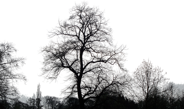 Trees01_by_brotherguy by BrotherGuy