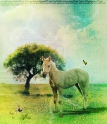 Palomino Foal by I-Cabalistic-I