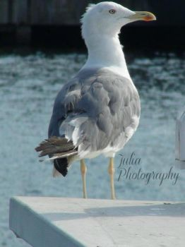 Seagull by StandAndStare