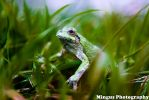 Macro Photography - Frog Guest by justarus