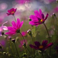 Flowers by Justine1985