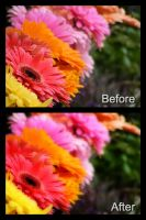 Orton Effect PS Action by KobraPhotography