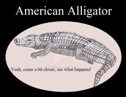 Reptile Buddies American Alligator by UnicronHound