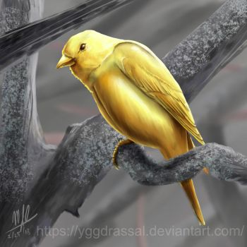 Gold Finch by Yggdrassal