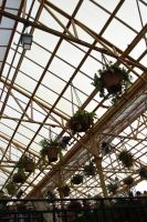 Green Houses 3 by Prue126