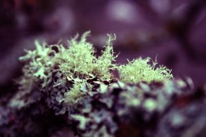 Strange Moss 01 by falcona