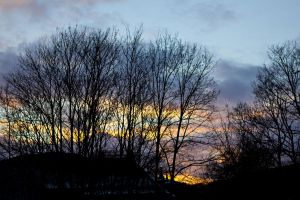 Sunset behind trees by mprangenberg