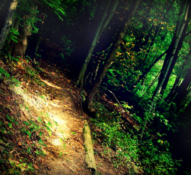 ...Into the Forest'' by Go-C-A-Doctor