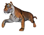 Tiger pose 6 of a gazillion by madetobeunique